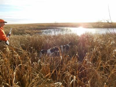Spaniels-pair-pond