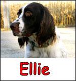 Ellie_sm
